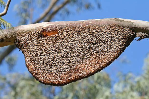 How To Get Rid Of A Beehive Easily Honey Bee Hives Bee Hive Bee Removal