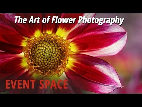 THIS is How To Do Amazing Flower Photography