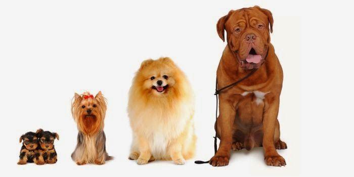 Art & Candy: I cani non mentono sull'amore- Jeffrey Moussaief M...