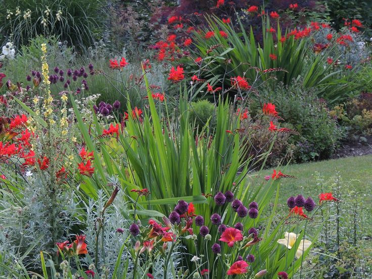 garden design by carolyn mullet