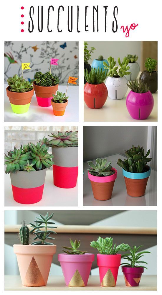 love me some succulents! i've been painting cheap terra cotta pots with bright colors to adorn our front porch but i love this idea of adding the gold foil triangles!!!