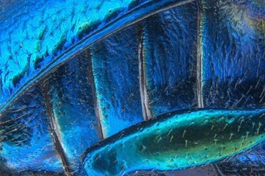 Finalists of Nikon Small World 2016, the Microphotography Competition — The best photographs of the year taken with the help of a light microscope.