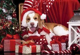 lucia montis soprano: auguri di buon anno!