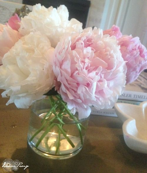 When to Plant Peony Flowers for Spring - NOW is the time! Late September and October!