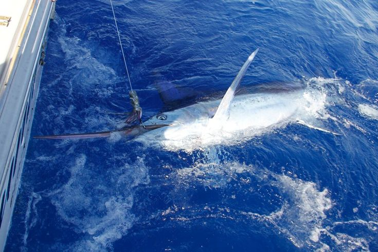 Best Fishing Charters in Puerto Vallarta