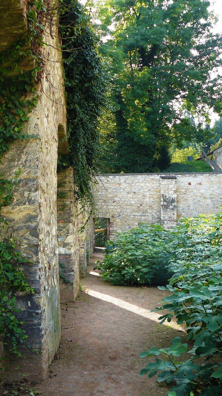 Fig plantation in midst of Prague castle ruins, Hradčany; Czech republic