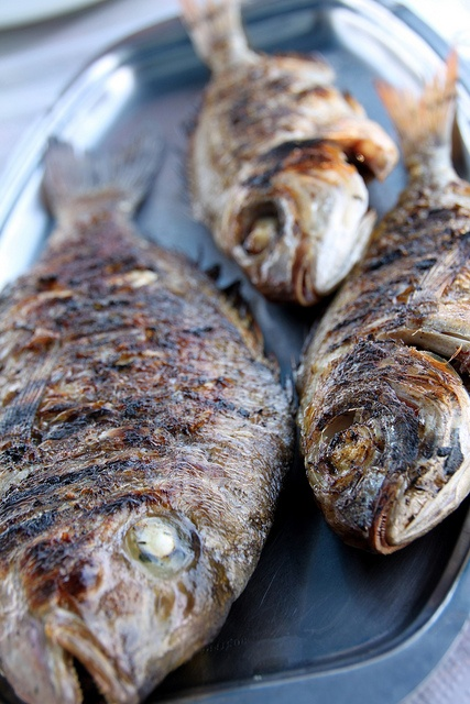 Synagrida (Sea Bream), Kavourakia Restaurant, Ag. Georgios, Santorini