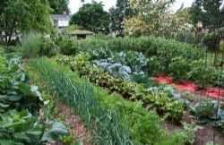 Organizzare l'orto in giardino o sul balcone L'organizzazione dell'orto è fondamentale per ottenere sempre dei buoni risultati. Non bisogna necessariamente avere dello spazio all'aperto, un giardino o del terreno da poter coltivare per organizz #orto #giardino #balcone #terrazza