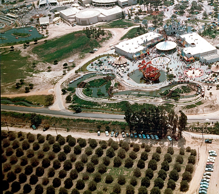 Today, the orange grove is gone, but amazingly those eucalyptus trees have survived.  You can see them today as you face the Storybook Land attraction.  The trees were planted over a hundred years ago by Anaheim farmers as a windbreak to their property line.  (current day photo at link)