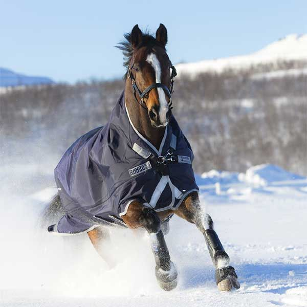 7 Best Staff Picks Images On Pinterest Horse Blanket