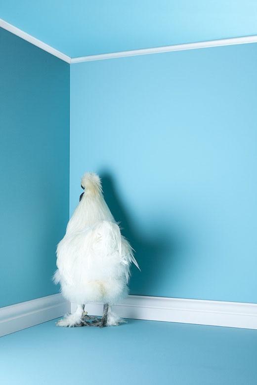 Poultry by Mitch Payne