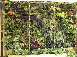 vertical garden texture - Google Search