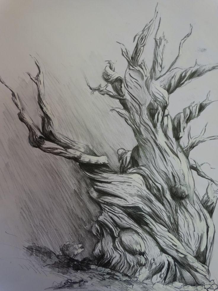 ga lle bigoni dessin d 39 arbre mort aux crayons graphites. Black Bedroom Furniture Sets. Home Design Ideas