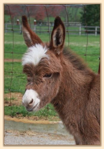Otro mini burro