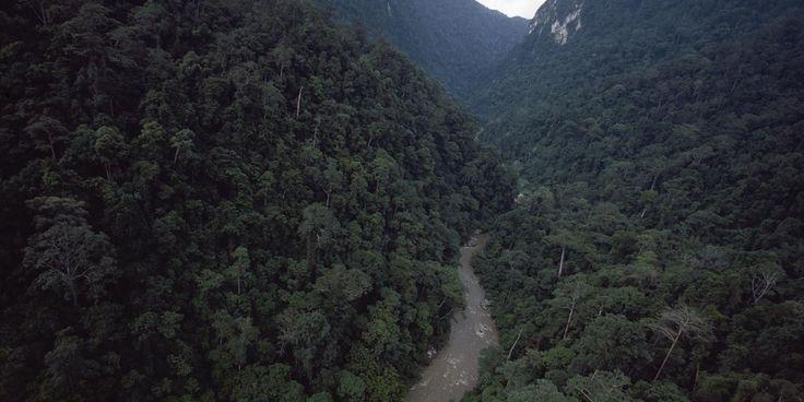 Votre ancien téléphone portable pourrait sauver la forêt tropicale