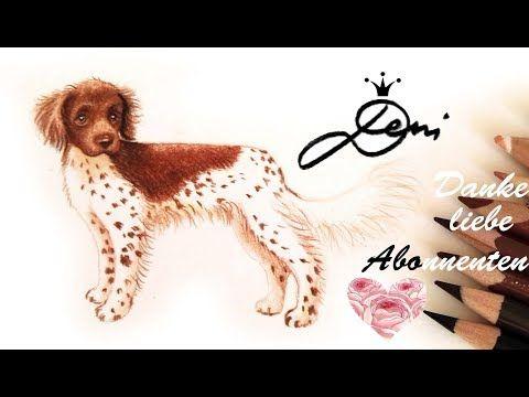 Wie zeichnet man einen Hund Münsterländer How to draw a Dog Munsterlander как се рисува куче - YouTube