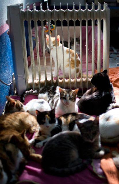 Jerozolima, koty ogrzewają się przy kaloryferze w schronisku. http://www.tvn24.pl/zdjecia/zdjecie-dnia,46897,lista.html