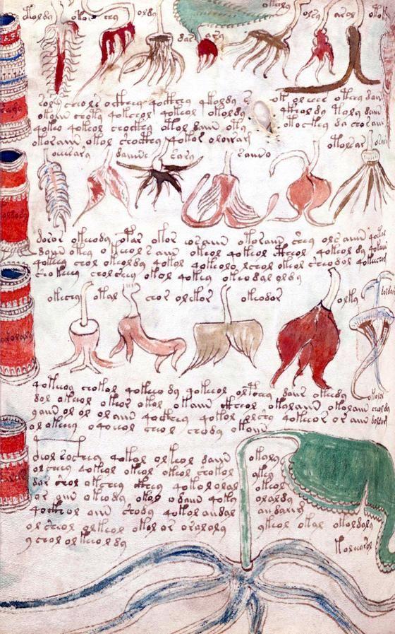 Das Voynich Rätsel