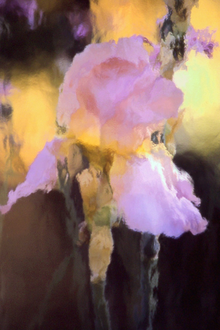 Iris in Pink by Michelle Safer