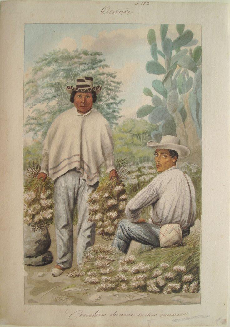 """""""Cosecheros de anís, indios mestizos. Ocaña"""". Carmelo Fernández, 1850. BNC, 5101."""