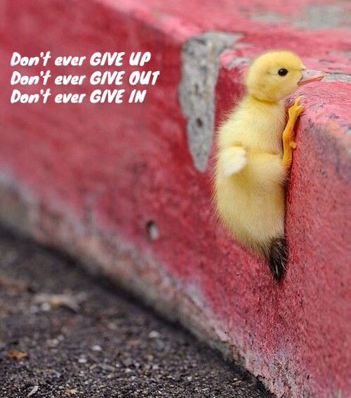 Don't ever give up, give out, or give in.