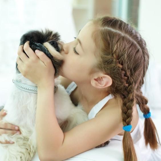 Razas de perros pequeños indicados para niños  #ExpertoAnimal #MundoAnimal #ReinoAnimal #Animales #Naturaleza #Perros #Perritos #Canes #Mascotas