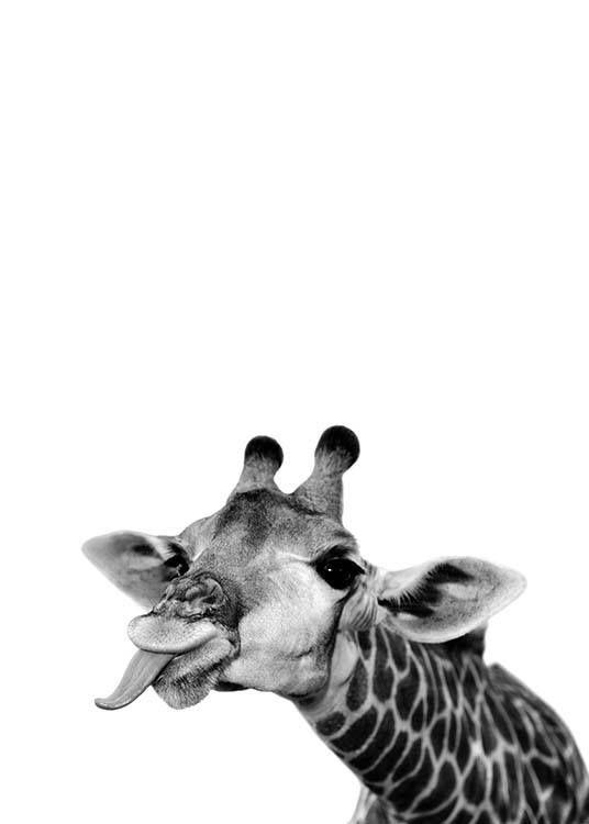 Schwarzweiß-Poster mit dem Motiv einer Giraffe. D…