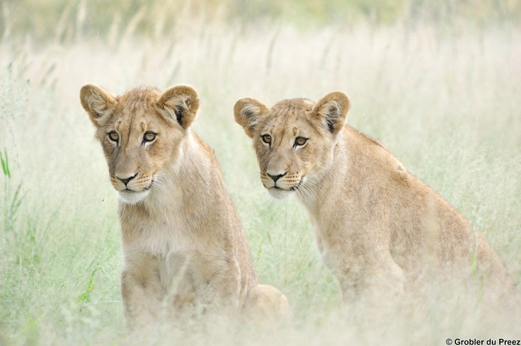 Grobler du Preez Photography - Wildlife gallery