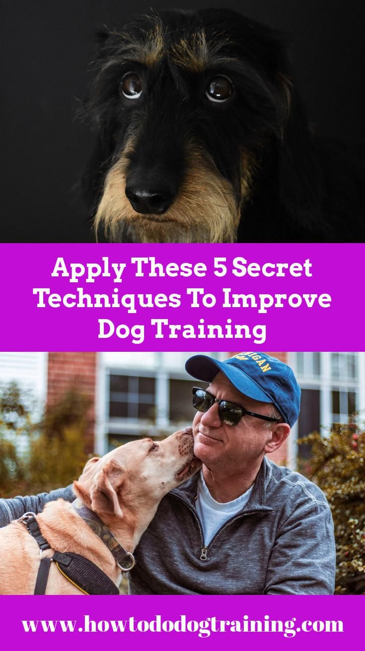 Need Aid With Pet Training Think About These Tips When Training