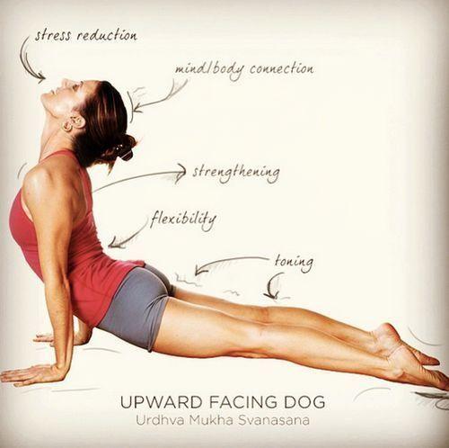 Con Urdhva Mukha Svanasana la spina dorsale si distende, il petto viene sia allungato che aperto, il respiro diventa più ampio. #yoga #asana
