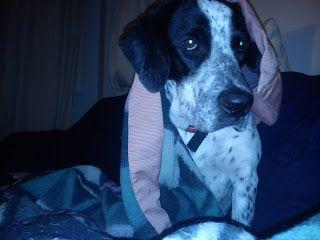 Live, Laugh, Love!: Ο σκύλος μου είναι επιθετικός