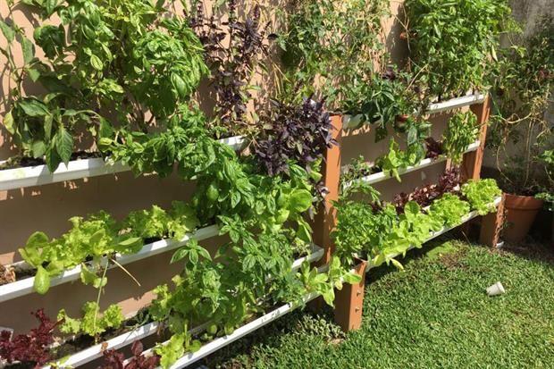 Verduras frescas: hacé una huerta hidropónica en tu casa  Foto:Gentileza Verde Agua