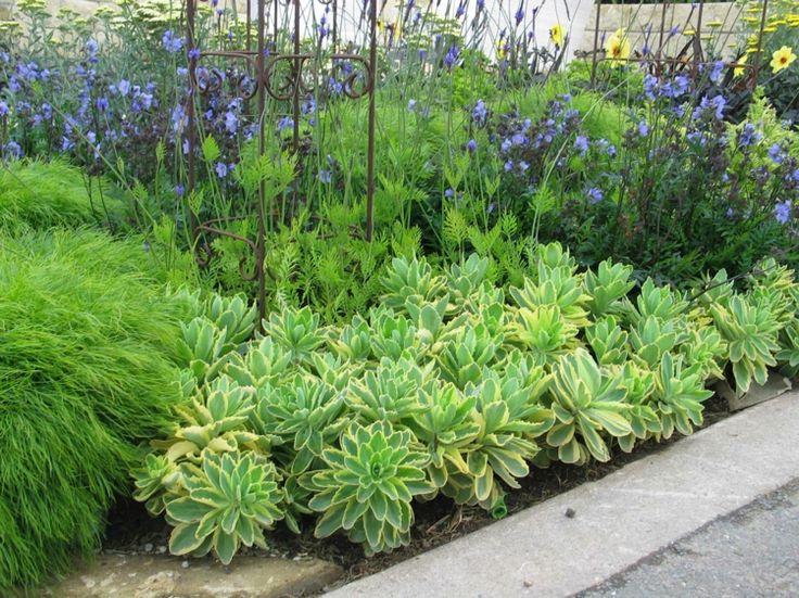 480 best pflanzen images on pinterest | flower boxes, nursing care, Hause und Garten