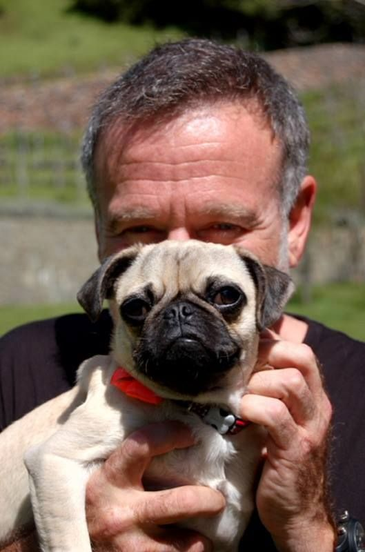 Robin was a fearless actor and comedian, but also an adoption advocate and pug dad!In March, 2010, Robin adopted Leonard (pictured here) from Curly Tail Pug Rescue.