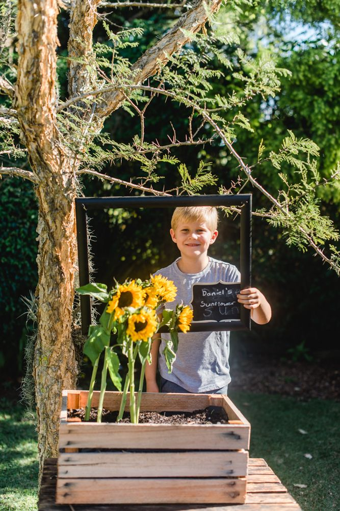 Sow your own Spring Sunshine with Sunflowers - Life is a Garden