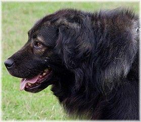 Vereniging Herders- en Berghonden uit Zuid- en Oost-Europa en Azië