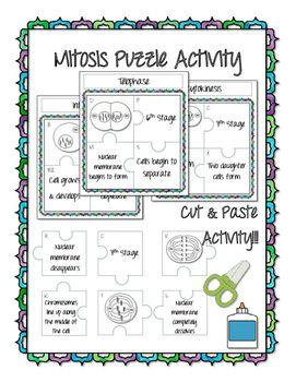 Mitosis Activity | Mitosis, Meiosis activity, Activities