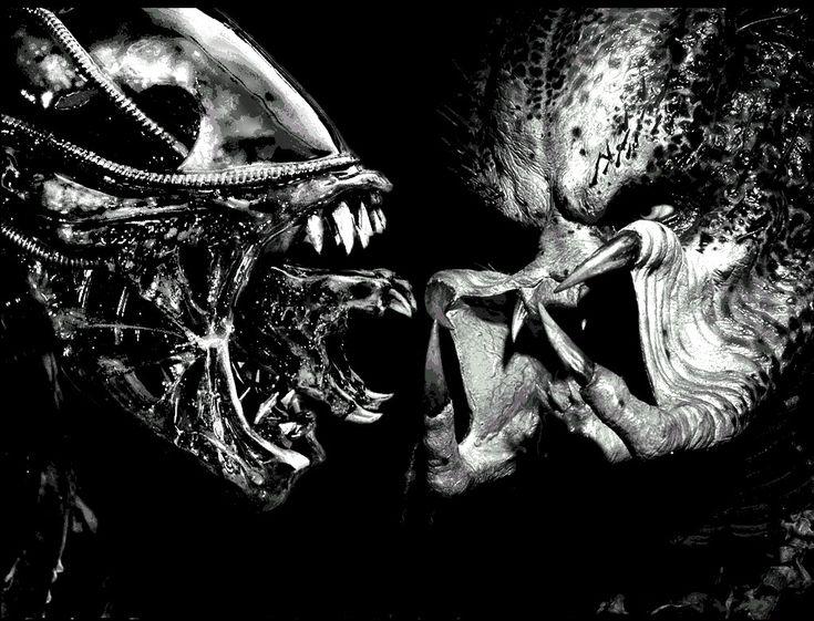 Google Image Result for http://1.bp.blogspot.com/-jLc5pjtxQ5I/T9dR--cAT6I/AAAAAAAAF8I/0k0xSouFRzQ/s1600/alien_predator.jpg