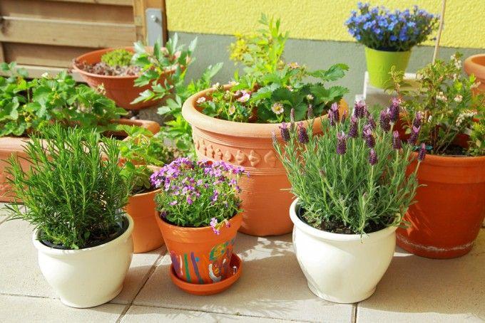 Un balcone è uno dei rimedi naturali contro le zanzare più efficaci: le piante repellenti tengono lontani questi insetti