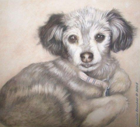 Shelley ~ Derwent Pastel on Velour , 8x10