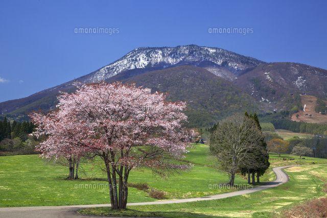黒姫高原から望む黒姫山と桜 (c)HIDEKI NAWATE/SEBUN PHOTO