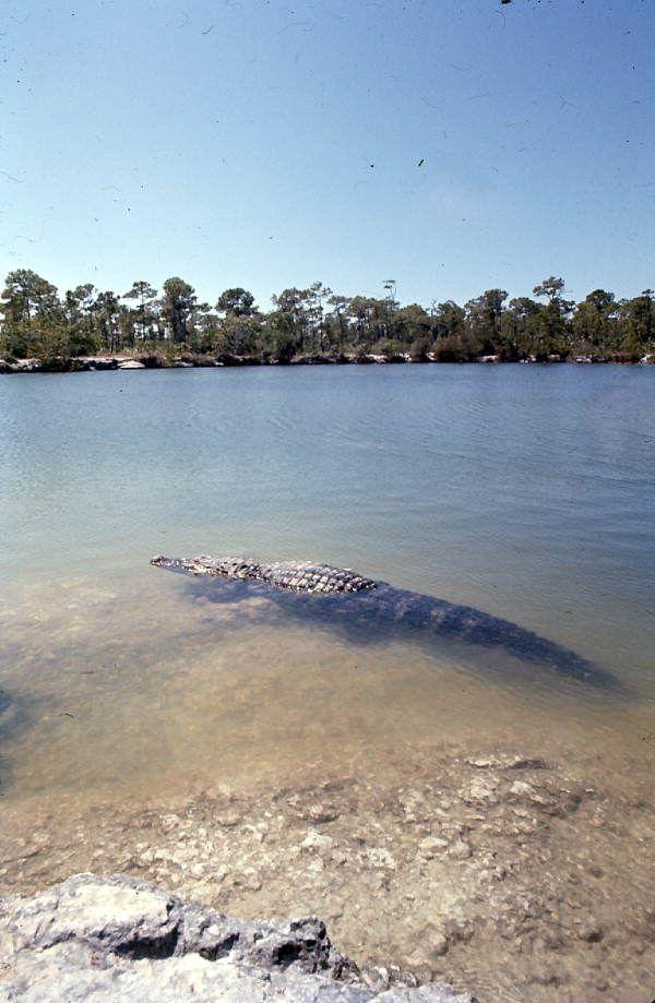 The Blue Hole, Big Pine Key, Florida Keys