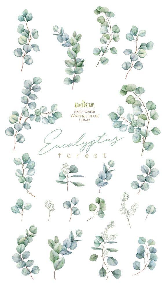 Eucalyptus Watercolor Floral Clipart Individual Elements Green