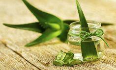 Comment cultiver de l'#aloe vera à la maison ? -> J'en ai depuis plusieurs années, top et simple !