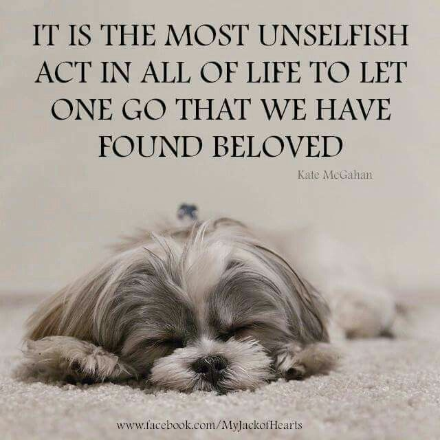 As pet owners, do you find you face any small day to day problems?