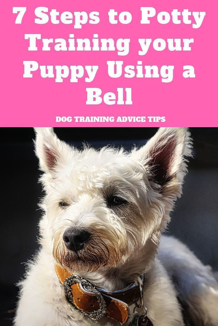 7 Steps To Potty Training Your Puppy Using A Bell Dog Training Advice Tips In 2020 Training Your Puppy Dog Training Dog Training Advice