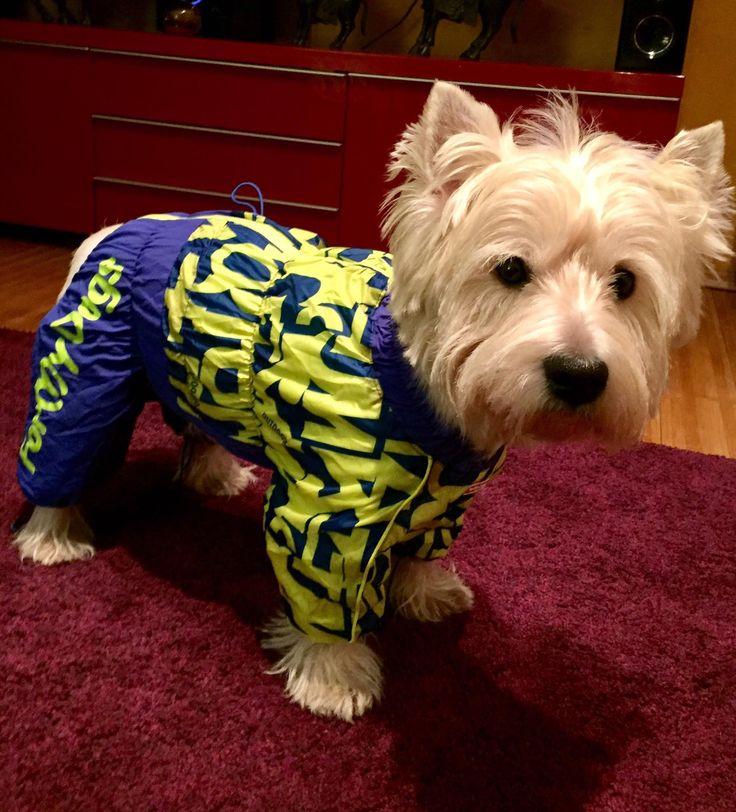 Spooky, dragalas si pregatit de joaca in Salopeta de Iarna de la King Maru --> https://kingmaru.ro/  #hainecaini #accesoriicaini #imbracamintecaini #caine #caini #catel #catei #dog #dogs #kingmaru