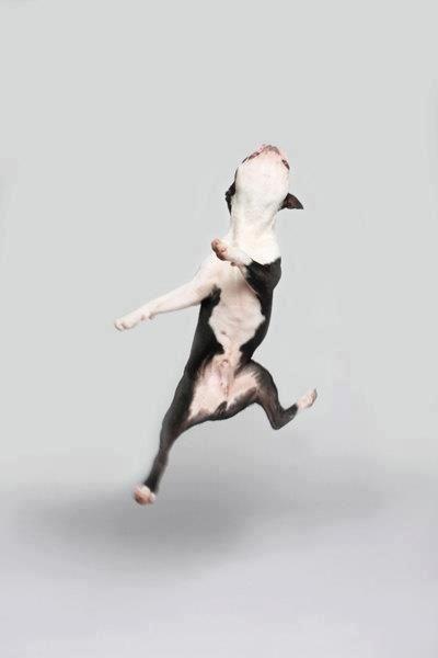 Il vient de voir le monsieur qui lui a dit la semaine dernière que s'il gagnait le million, il viendrait l'acheter !!!!!!!!!!! La la la la l'air un peu fou le monsieur...je ne dais pas pourquoi il regarde le chien avec un drôle d'air !