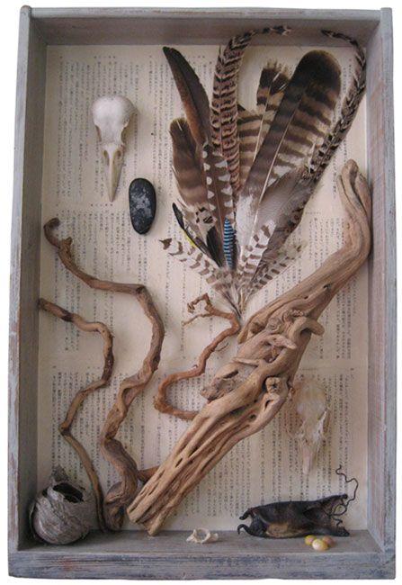 Fluid Mechanics, 1999 Sian Salcombe (Tregaron, Wales, UK) found drawer, found script, drift wood, crow and rabbit skulls, feathers, wasp nest, pebble, rabbit vertebrae, mermaid's purse