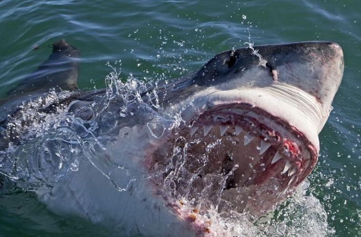 Shark Week 2014: The Good, The Bad And The Bloody; Shark Expert Gives Pros And Cons Of Discovery Channel's Popular Series